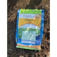 Organic Sharbati Wheat