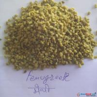 FENUGREEK  ( SABUT METHI )
