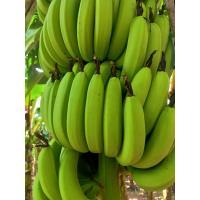 Fresh A grade  Banana (Tissue)