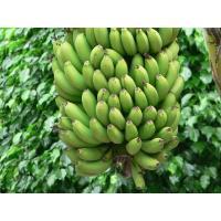 fresh-green-banana-1527052396-3892068.jpeg