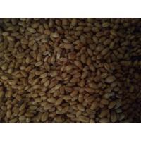 Wheat sell organic