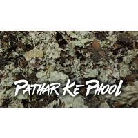 Stone Flower   Pathar Ke Phool Spice   Dagad Phool   Kalpasi