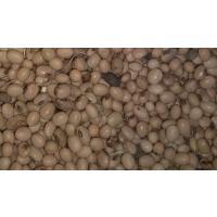 We have around 2280 kg soyabean seeds