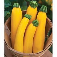 yellow-zucchini-500x500.jpg
