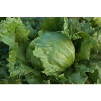Lettuce 1.jpg