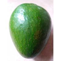 Avacado (Butter Fruit)