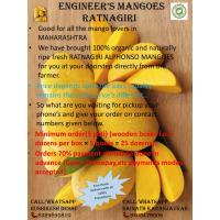 ENGINEER'S MANGOES
