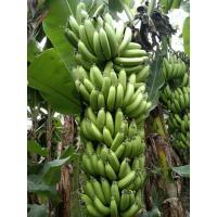 A Grade Banana