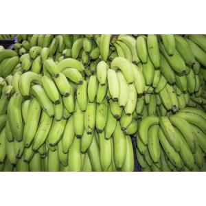 bananas_green-638194406-59009d635f9b581d59ba1afb.jpg