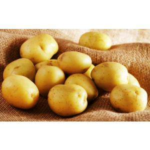 Mathura  fresh  potato.jpg