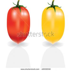 stock-vector-shiny-red-and-yellow-tomatoes-isolated-on-white-vector-48559558.jpg