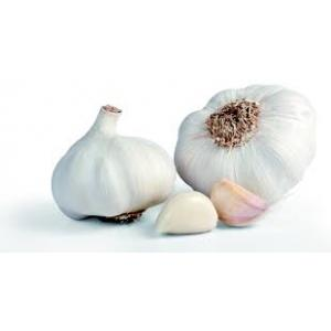 Garlic_big.jpg