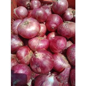 Onion Garva.jpg