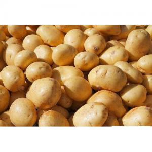 sugar-free-potato-chipsona-500x500.jpg