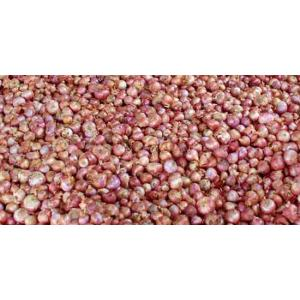 small onion.jpg
