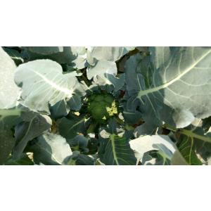 broccoli-3.jpeg