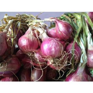 Jaya onion4.jpg