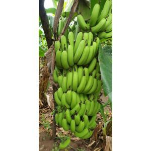 banana_3.jpeg