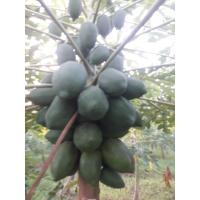 Papaya for consumption