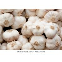 Best quality garlic