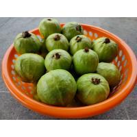 Taiwan Pink guava