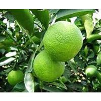 Sweet lime mosambi