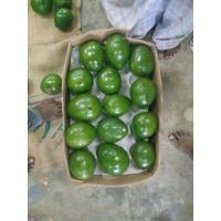 avocado-500x500.jpg