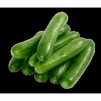 cucumber seedless