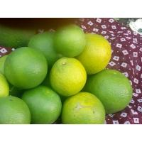 sweet mosambi for sale