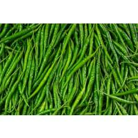 Green chilli with high quality