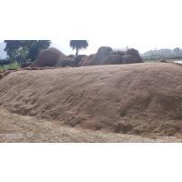Ready stock of Paddy MTU7029