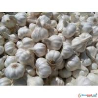 Good Quality and Clean Garlic (Lahsun))