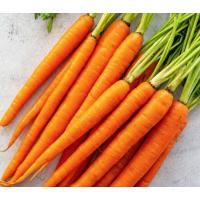 बेहतरीन क्वॉलिटी की गाजर