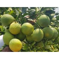 Farm Fresh Musambi