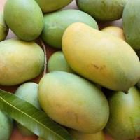 Badami and Mallika farm fresh Mangoes