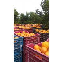 nagpuri orange