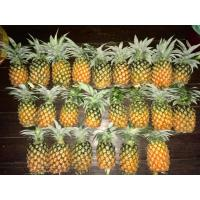 Fresh and Sweet Queen Pineapples from the Borail hills at wholesale rate