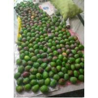 Organic Green Mangoes