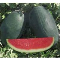 Icebox  Watermelon