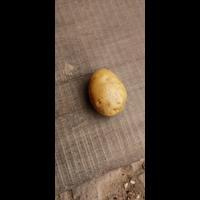Sell potato