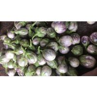 Fresh brinjal from farm available from farmers