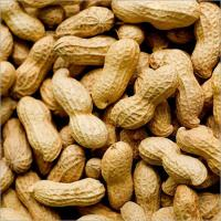 Quality groundnut / mungfali with shell
