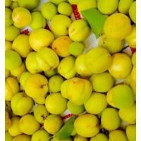 Himachal White apricot