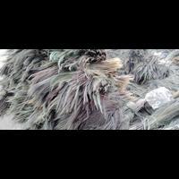 Grass Broom | Phool Jadu | Raw Material Grass Broom