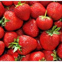 Fresh Organic strawberries at doorstep