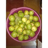 Farm Fresh Guava