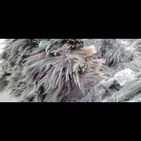 Grass Broom   Phool Jadu   Raw Material Grass Broom